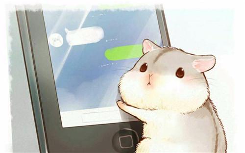 仓鼠的日常5.jpg